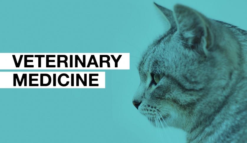 coursesmalaysia_article_veterinarymedicine_2018.jpg