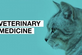 coursesmalaysia_article_veterinarymedicine_2018.jpg